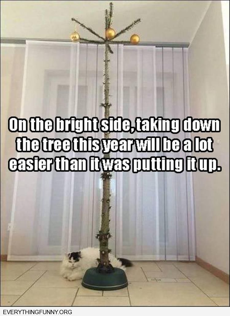 funny cat empty tree easier to throw out than last year due to cat