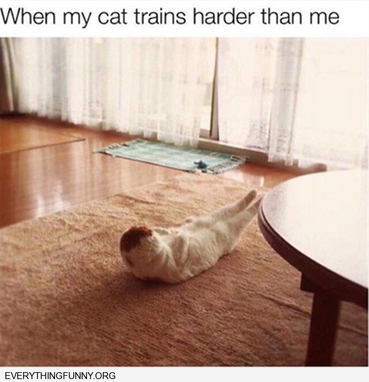 funny when my cat works our harder than me