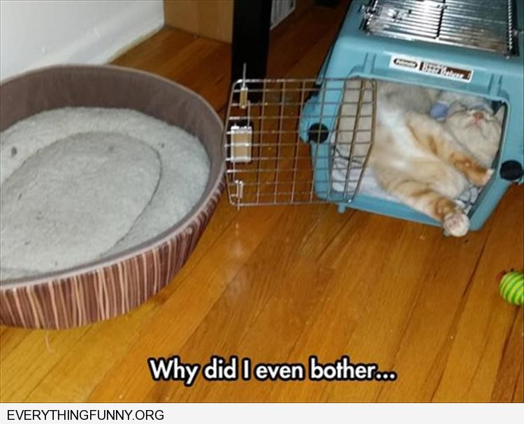 funny why did i bother buy cat bed cat sleeps in cage