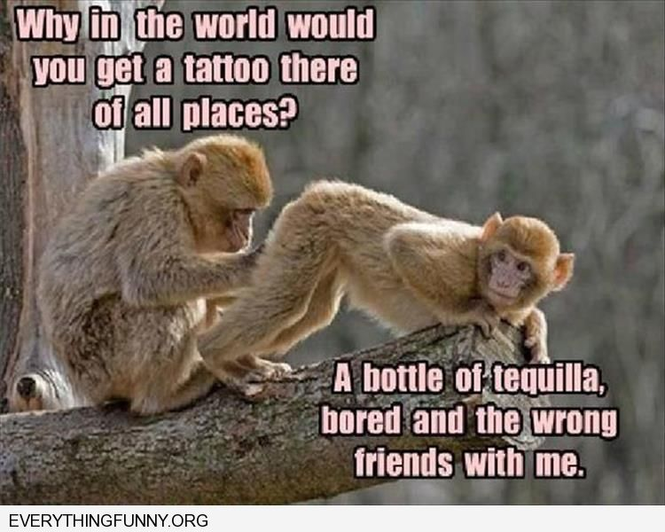 funny caption monkeys whey did you get a tatoo there bottle of tequila bored and the wrong friends with me