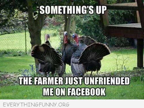 funny turkey pictures, funny thanksgiving pictures, funny facebook pictures,