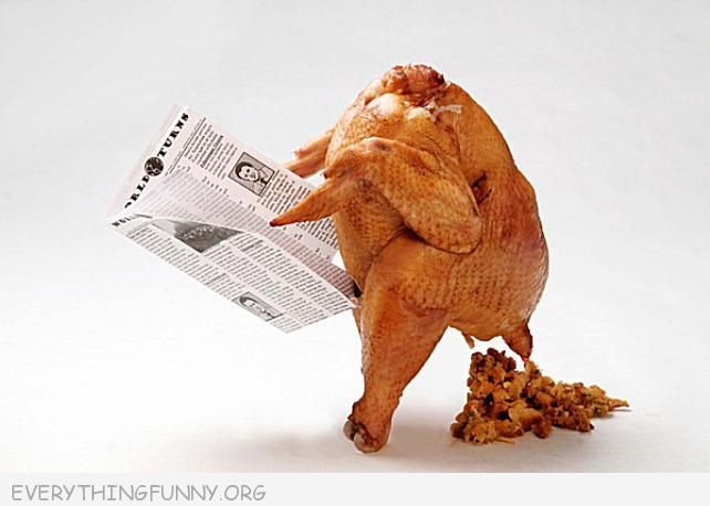 Funny Turkey Picture Reading Paper Pooping Stuffing, fnny thanksgiving photos, funny thanksgiving, funny thanksgiving pictures, funny turkey pictures,