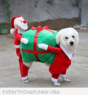 funny dog costume, funny dog pictures, funny dog christmas, funny dog cosplay, funny pet costumes,