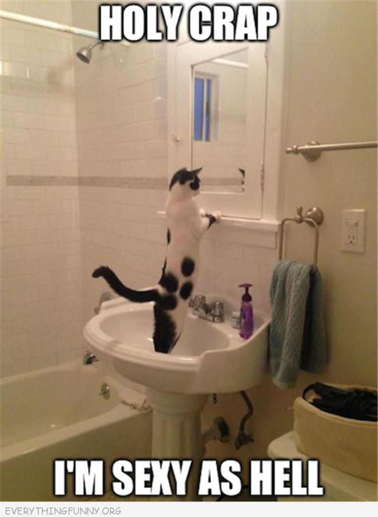 funny cat pictures, funny cat photos, funny caption pics, funny photos, funny pics,