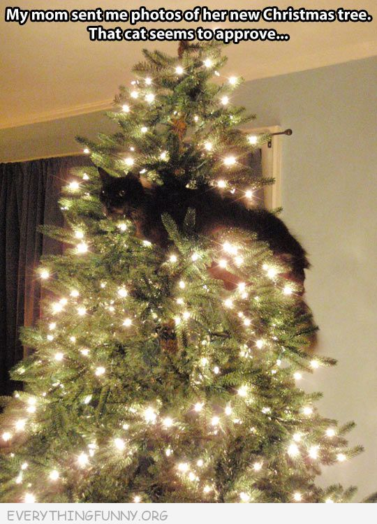 funny cat pictures, funny cat photos, funny cats, funny christmas photos,