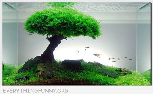 funny photos, great fish tanks, funny fish tanks, awesome fish tanks, fish tank ideas, funny pics,