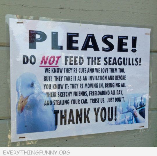 Funny Signs Please Do Not Feed Segulls - Everything Funny