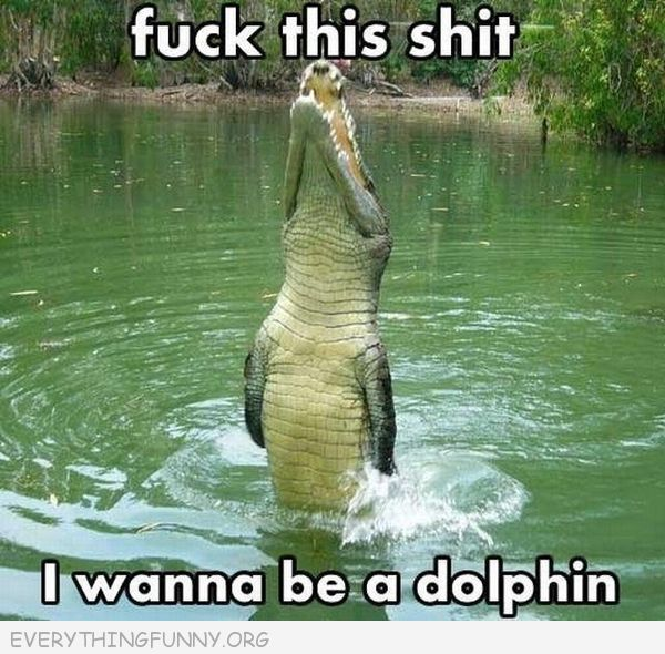 funny i want to be a dolphine