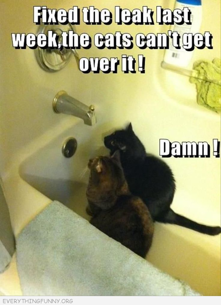 funny cats, funny cat pictures, funny cat memes,