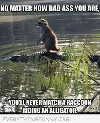 Funny Racoon Riding On An Alligator
