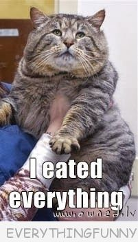 funny cat pictures, funny fat cat, funny captions, funny memes,