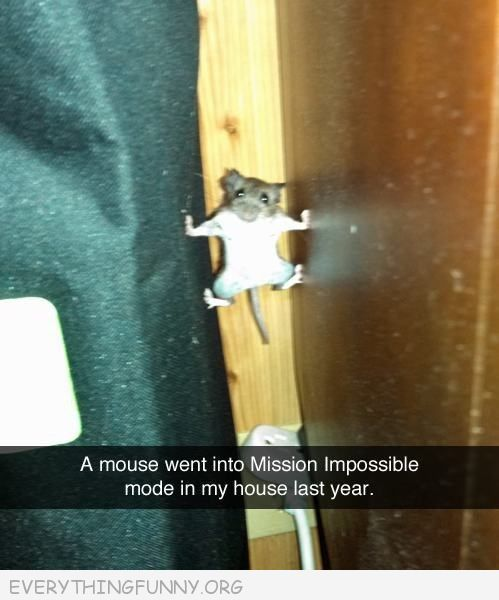 funny animal pics, funny mouse picture,