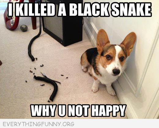 funny captions, funny dog pictures, funny dog pics,