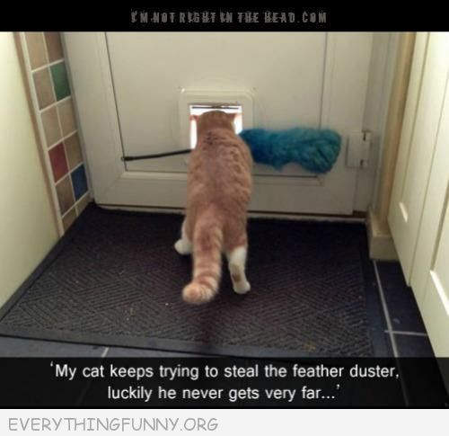 funny cat can't get duster out of the cat door, funny cat pictures,