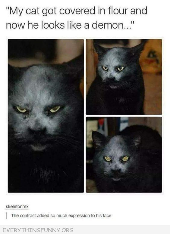 funny cat got covered in flour and now looks like a demon