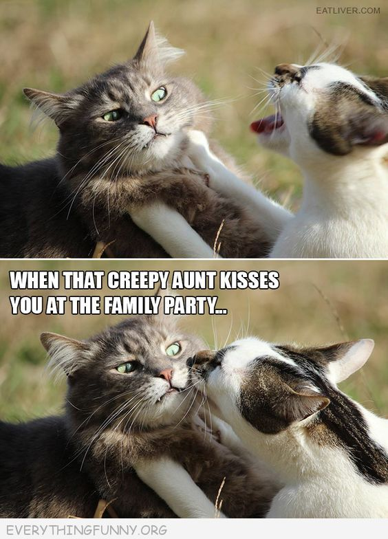 funny cat picture caption when that creepy aunt kisses you at the family party