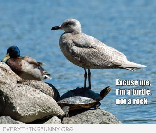 funny captions, funny animal pictures, funny photos, funny memes,