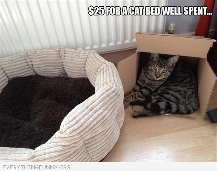 $25 for a cat bed and cat sleeps in box everythingfunny.org