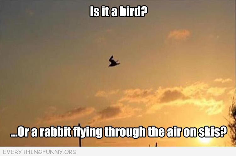 funny optical illusion bird looks like rabbit on skis everythingfunny.org