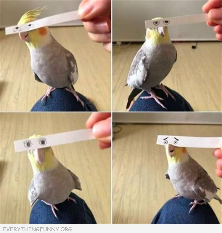 funny pictures, funny pics, funny photos, funny birds, funny animals,
