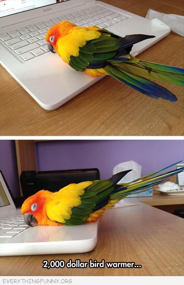 bird parakeet sleeping on laptop computer $2,000 bird warmer