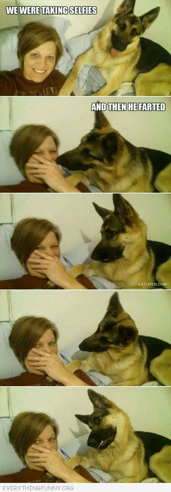 funny dog pictures, funny dog expressions,