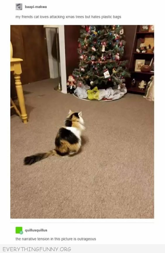 funny cat loves attacking christmas trees but afraid of plastic bags so bags placed around tree