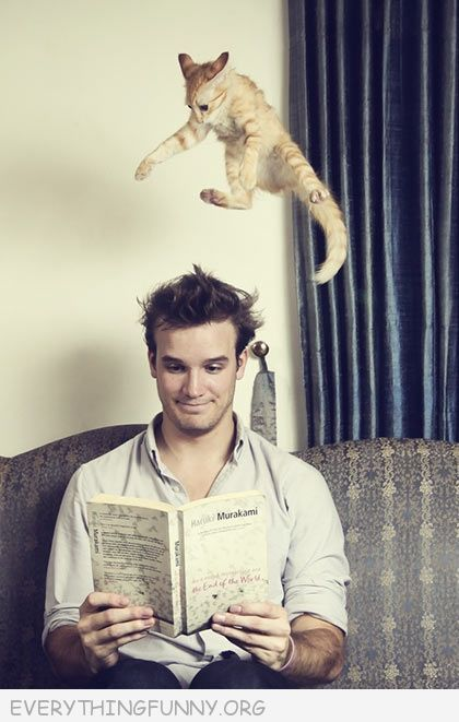 funny cat jumping about to land on man's head