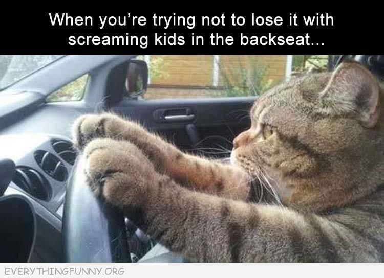 cat driving trying not to lose it kids in backseat,, funny caption pics, everythingfunny.org