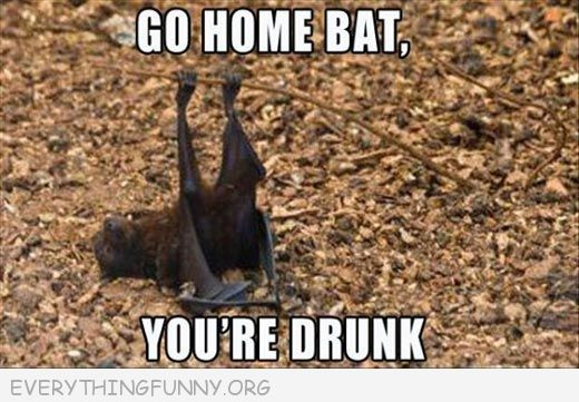 go home bat you're drunk, go home bat  you are drunk, funnies you are drunk pictures,