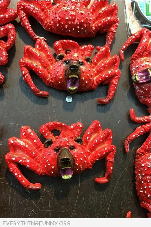 funny crab bear dog face art, funny products, funny items, ugly items,