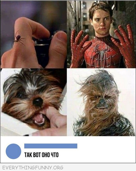 funny bitten by spider turn into spiderman bitten by dog turn into chewbacca, funny marvel meme,