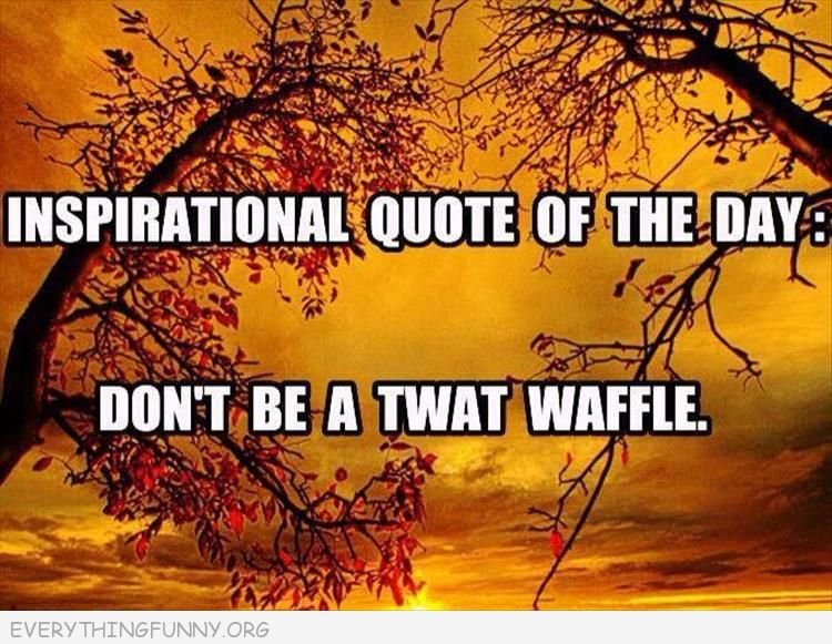 funny inspirational quote of the day don't be a twat waffle, funny quotes,