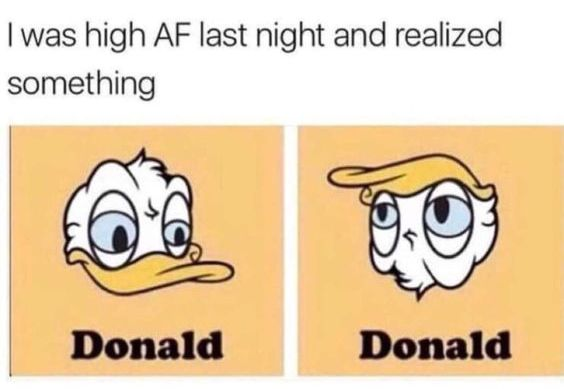 funny cartoon, donald duck upside down looks like donald trump