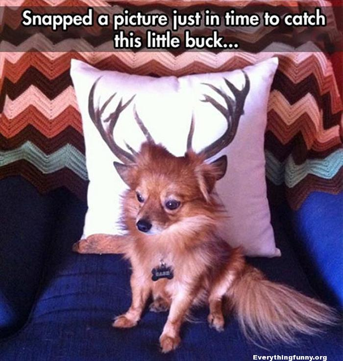 funny dog picture in front of pillow with antlers