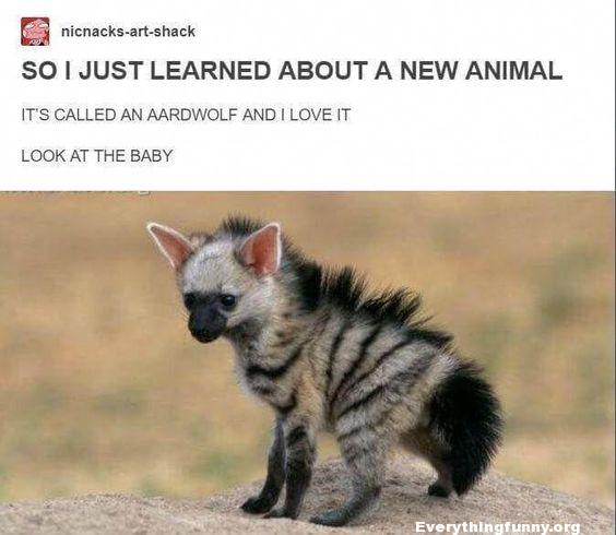 funny aardwolf ugly or cute can't decide