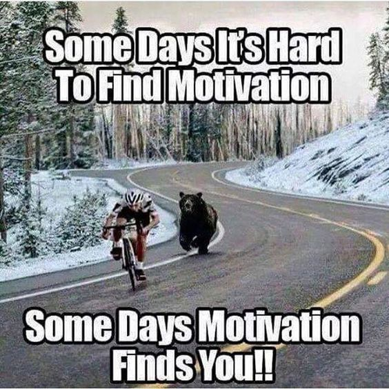 funny pictures, funny photos, motivation caption photo, bear chasing biker,