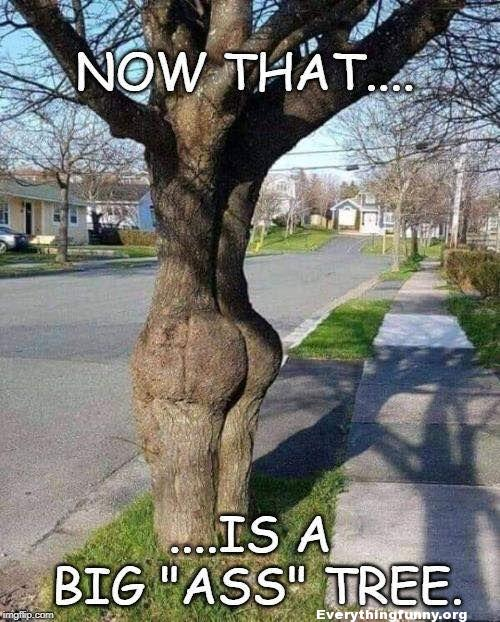 funny photo - tree looks like he has a big butt - now that is a big ass tree!