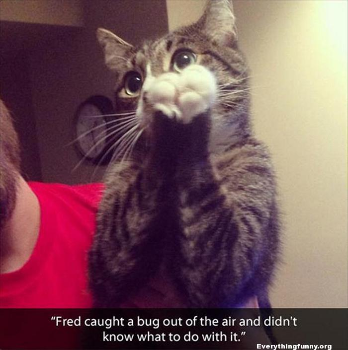 funny cat picture catches bug in air and doesn't know what to do with it