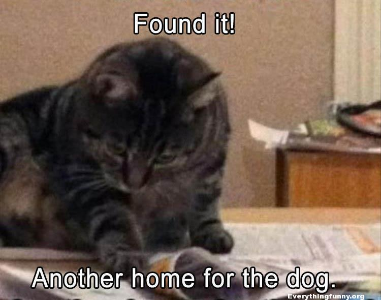 funny cat caption reading paper  fount it another home for the dog