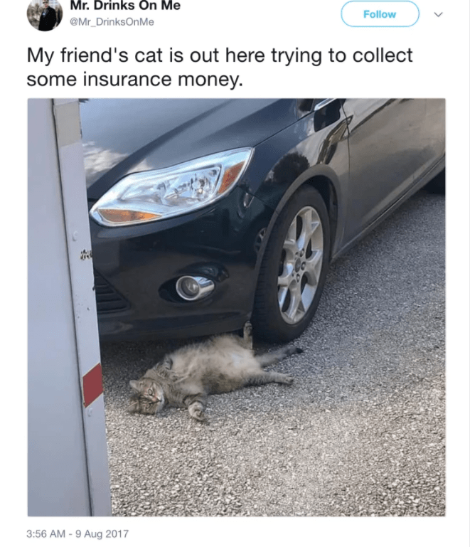 funny post cat lying under tire my friend's at is out trying to collect insurance money