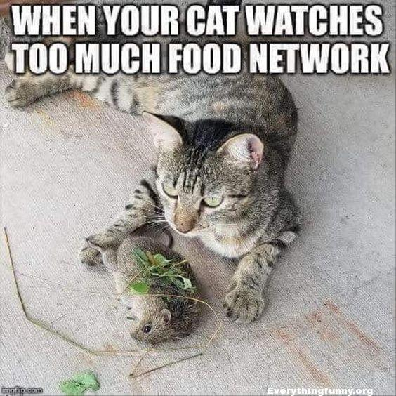 funny cat caption when your cat watches too much food network dead mouse covered with grass