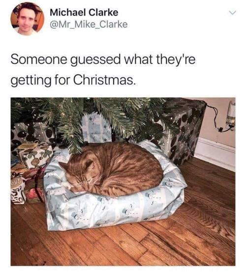 funny post cat sleeps on its cat bed Christmas present