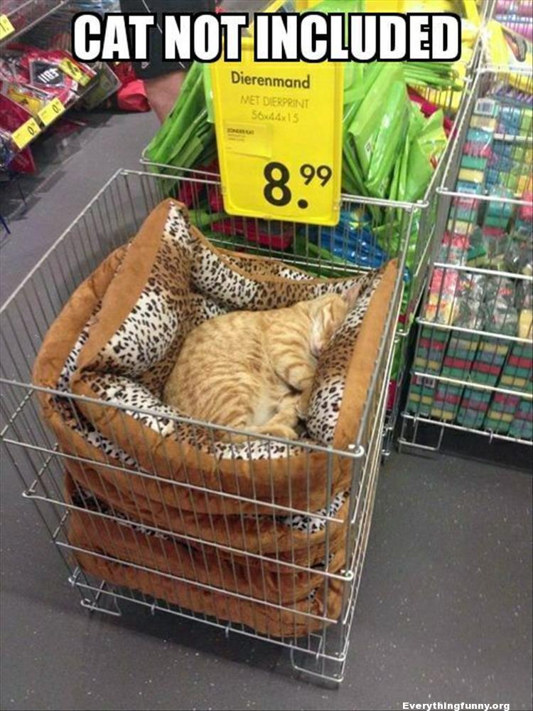 funny caption picture cat sleeping in store cat bed bin