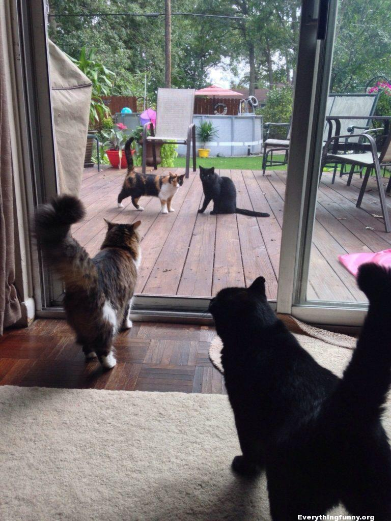 Funny cat caption pictures 2 indoor cats watch identical cats outside the door