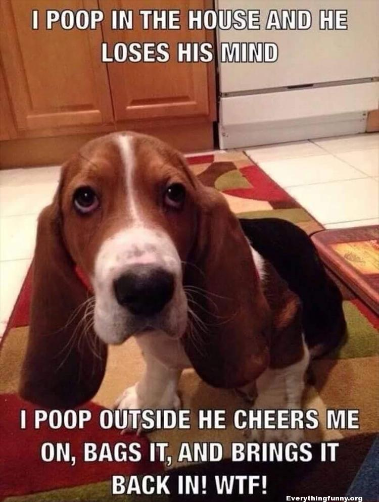 funny dog photo poop in the house picture