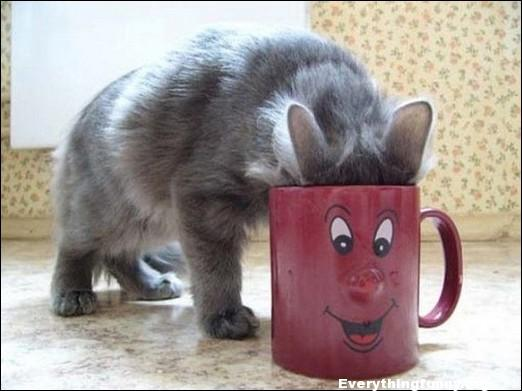 funny cat photo drinking from mug looks like cats face