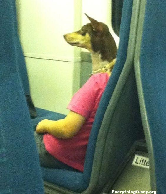 funny optical illusion dog head on person body