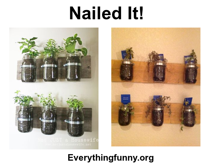 funny nailed it craft fail herbs in glass jars on wall