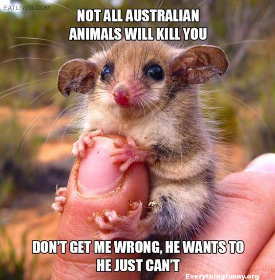 funny caption picture not all australian animals will kill you he wants to